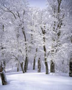 Woodhome Insurance, Pikesville Maryland. Winter Weather Tips, Pikesville, Maryland